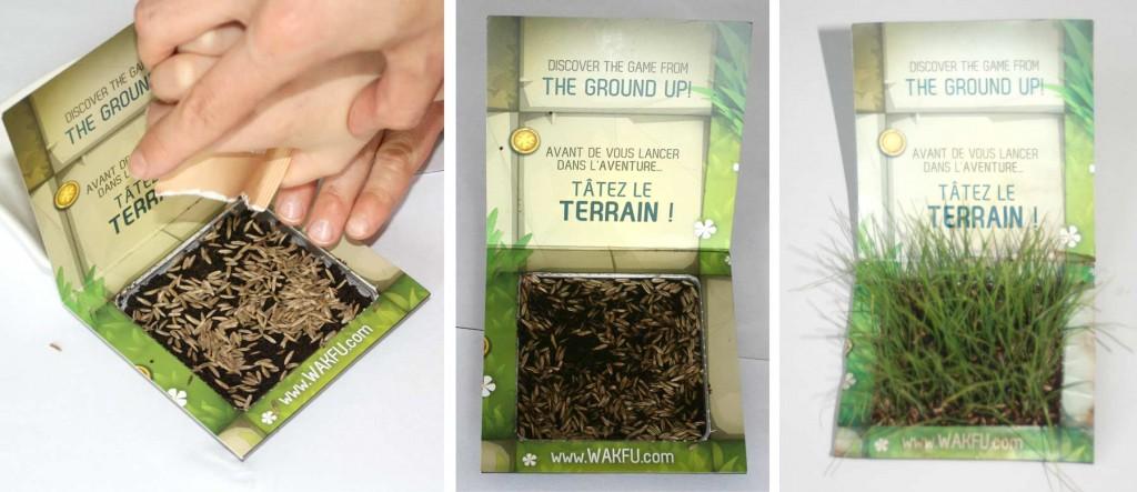 vrai carré d'herbe de Wakfu (au bout de 10 jours)