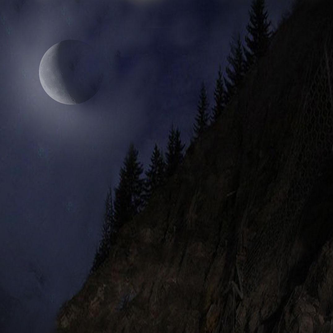 La nuit tous les arbres sont gris