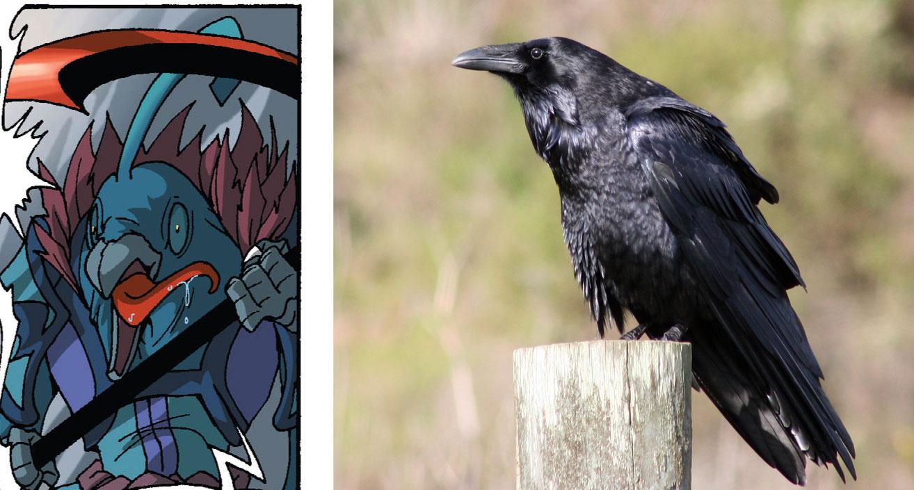Psycorax vient du Corvus Corax