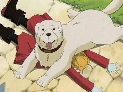 Alexander le chien de Shô Tucker (Fullmetal Alchemist)